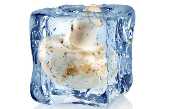 Como congelar setas f cilmente demos la vuelta al d a - Se pueden congelar las almejas crudas ...