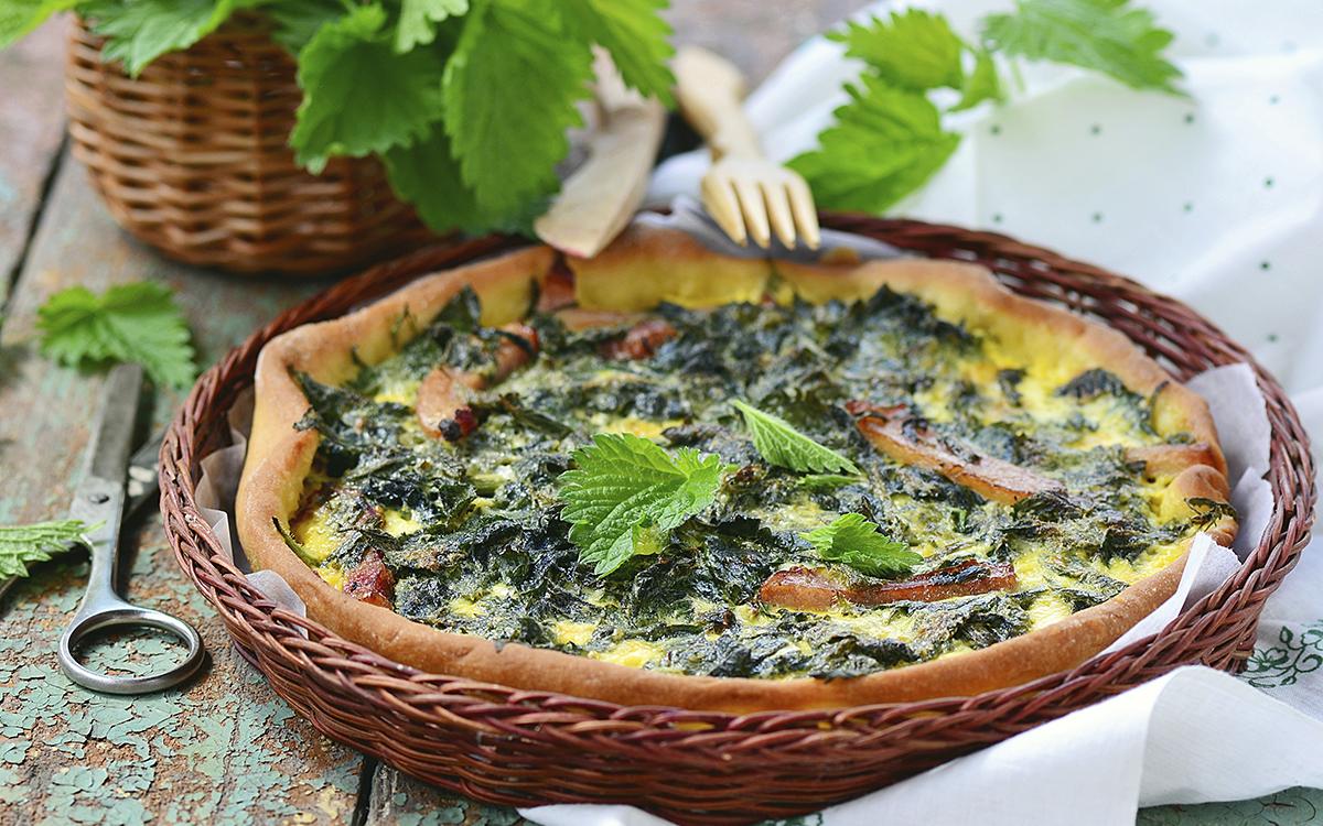 Genial cocinar ortigas im genes recetas de ortiga pastel for Cocinar hinojo